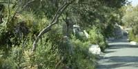 Rock of Gibraltar Path - Gibraltar