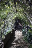 A flower tunnel next to Gaudí House Museum, at Park Güell - Barcelona, Spain