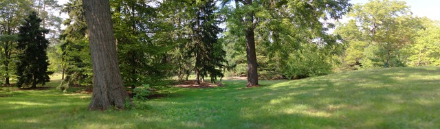 Panoramic view of a grove in Morton Arboretum