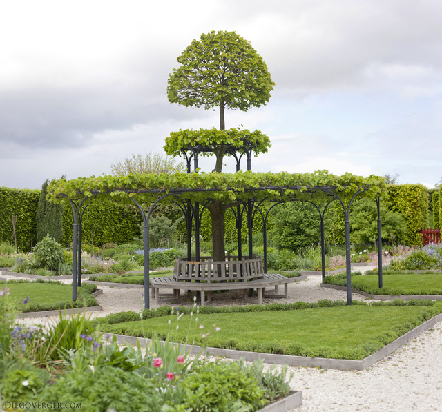 Central tree in the historic gardens of Muiden Castle - Muiden, Netherlands