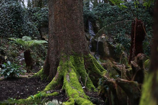The Fern Garden of Blarney Castle - Blarney, Ireland