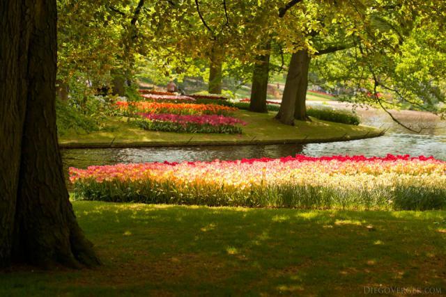 Macizos de flores a ambos lados de un curso de agua de Keukenhof - Lisse, Países Bajos