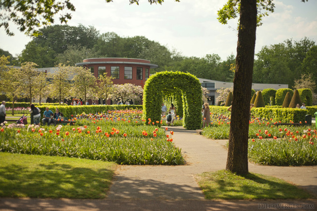 Tulips and ornamental bush arches in front of the Oranje Nassau pavilion - Lisse, Netherlands