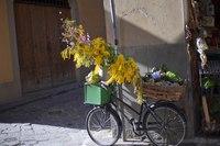 Bicicletta di un negozio nelle strade di Firenze - Firenze, Italia