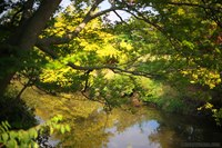 DuPage River through Morton Arboretum - Lisle, United States