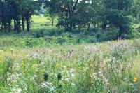 Cervi nel Arboreto di Morton - Lisle, Stati Uniti