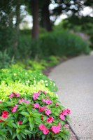 Pink flowers next to a path in the arboretum - Lisle, United States