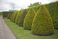 Poda ornamental - Muiden, Países Bajos