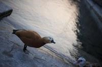 Birds of Geneva - Geneva, Switzerland
