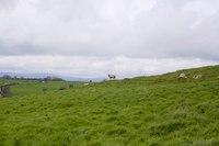 Prairies surrounding Rock of Cashel, Ireland