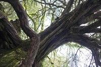 The Witch's Grove of Blarney Castle - Blarney, Ireland