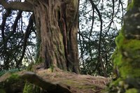 The Witch's Grove - Blarney, Ireland