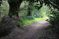 Woodland Walk, photo 2 - Blarney, Ireland