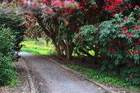 Woodland Walk - Blarney, Ireland