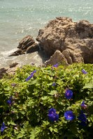 Flowers in the Balcony of Europe - Nerja, Spain