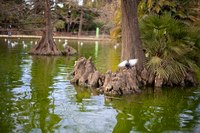 Birds and trees in the pond at Ciutadella Park - Barcelona, Spain