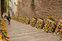 Pujada de la Catedral bordeada por trabajos florales en Temps de Flors - Girona, España