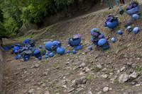 Trabajos florales en el cauce del río Galligants - Girona, España