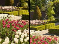 Tulipanes del Jardín Histórico de Keukenhof - Lisse, Países Bajos