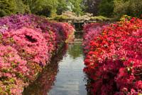 Flores multicolores bordeado un estanque - Lisse, Países Bajos